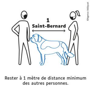 1 mètre est égale à un chien Saint Bernard